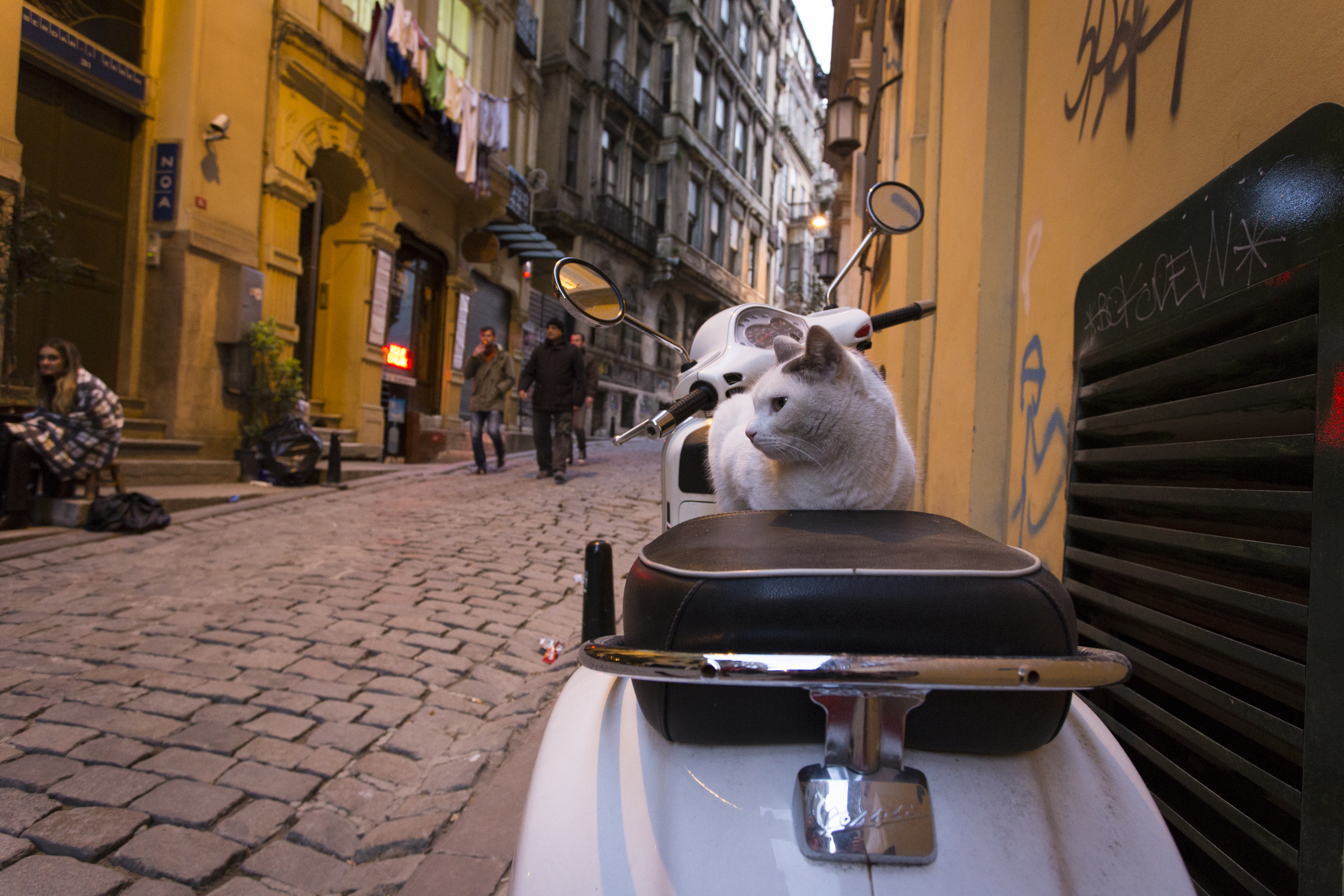 Cats are Popular in Istanbul